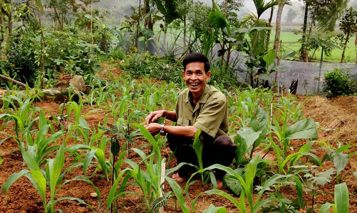 $25 could provide a family of five in Vietnam with enough seed to grow corn for a year