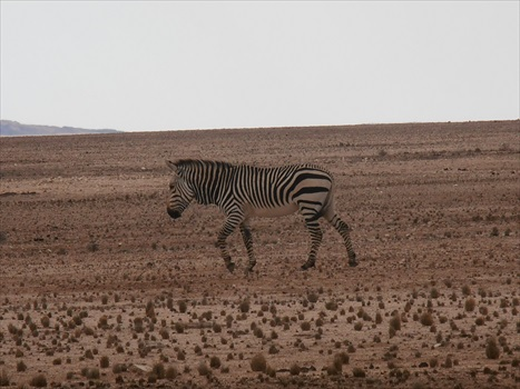 20160607_08_Zebras on the side of the road