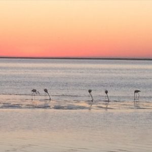 Walvis Bay - Flamingoes at sunset